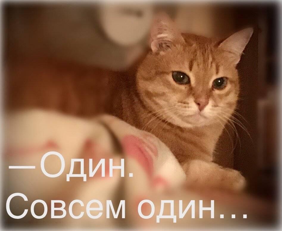 На какой срок можно оставлять кошку одну | мой обожаемый кот | яндекс дзен
