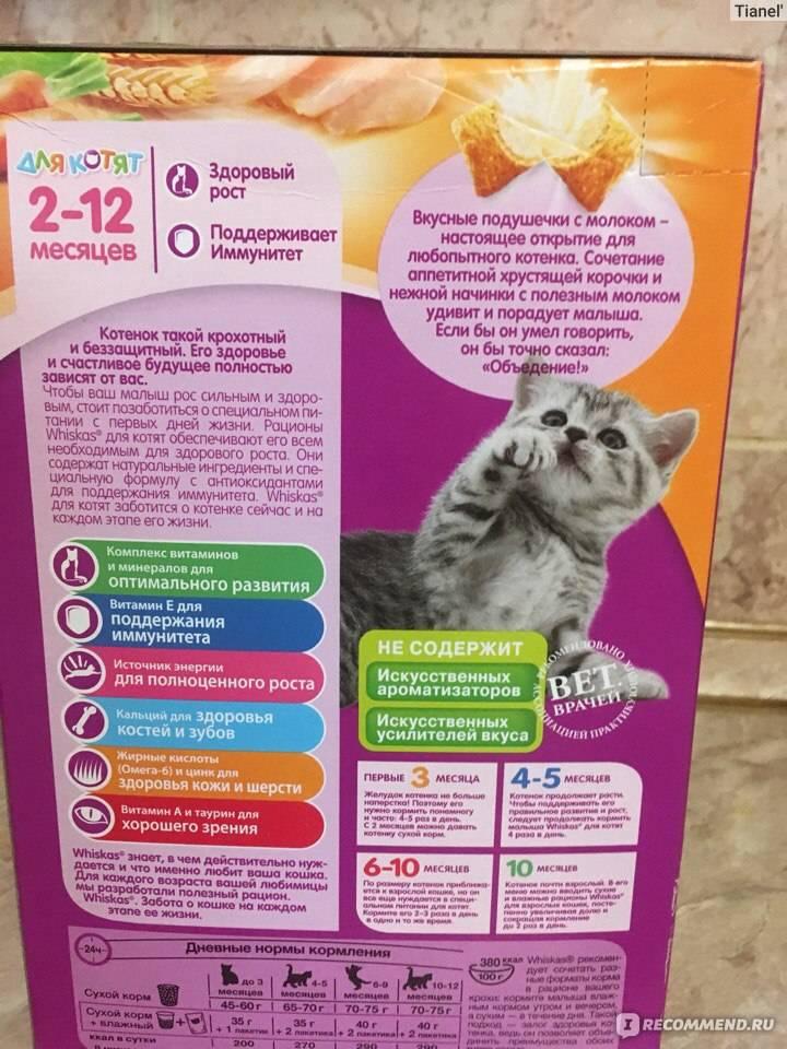 Чем можно кормить маленьких котят