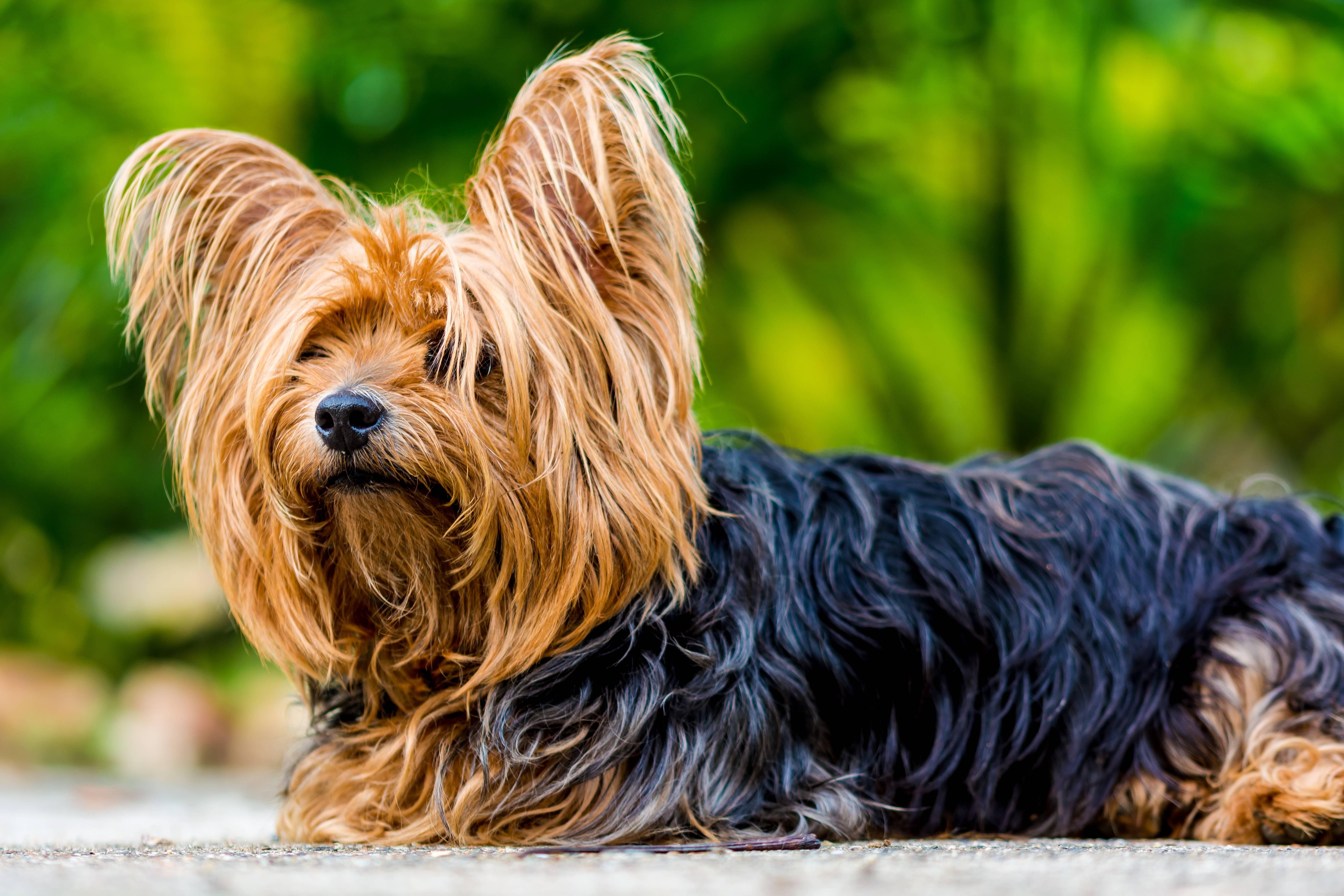 Топ-5 самых популярных в россии пород собак