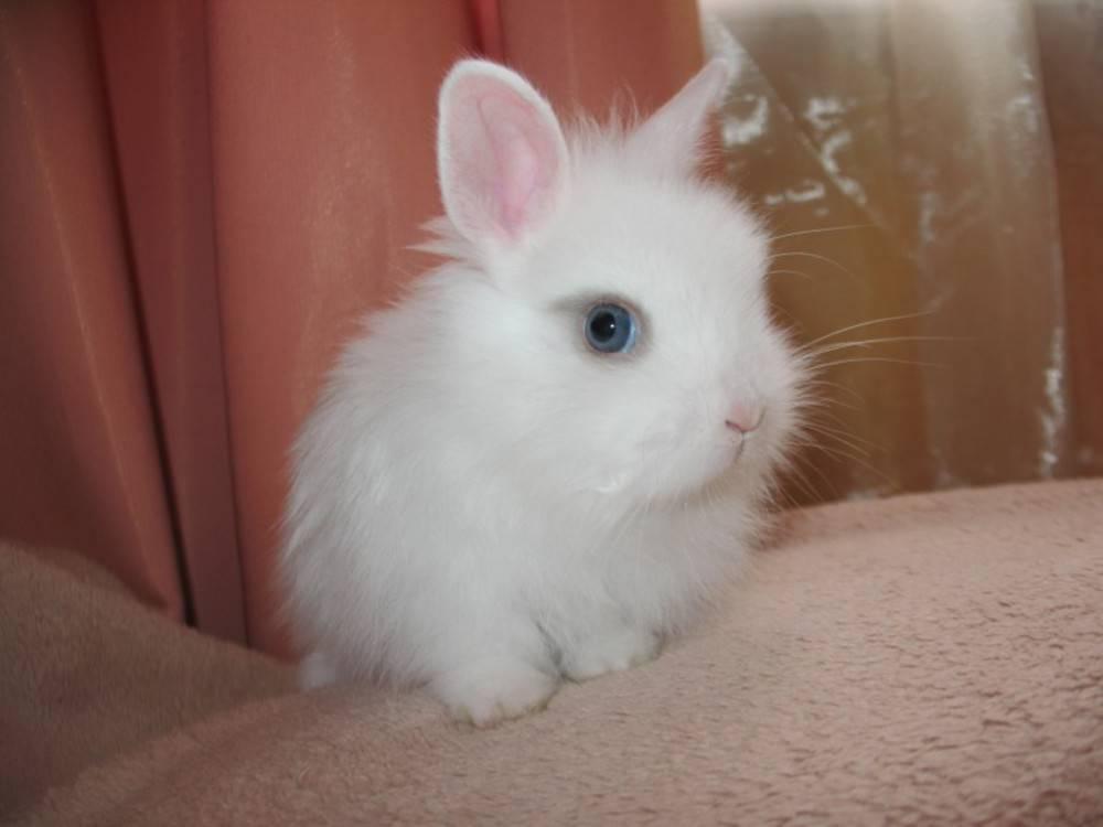 Правила выбора и примеры имен для кроликов