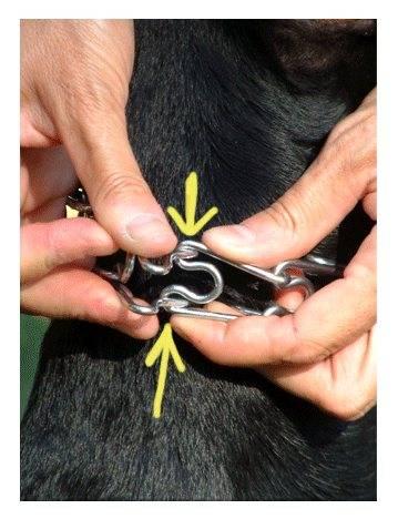 Строгий ошейник для собак: фото, как пользоваться?
