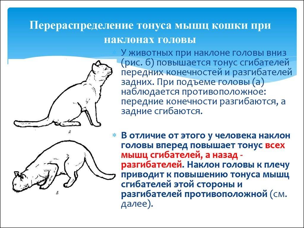 Есть ли у кошки связь между ее мастью и характером