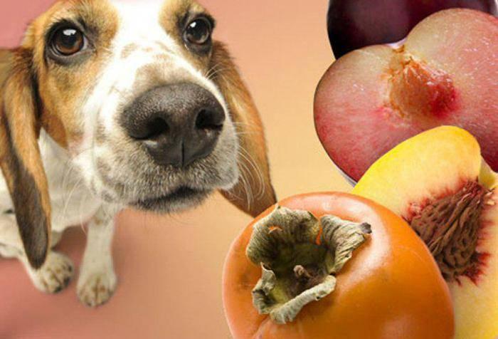"""Правила кормления собак, оптимальная частота приема пищи   блог ветклиники """"беланта"""""""