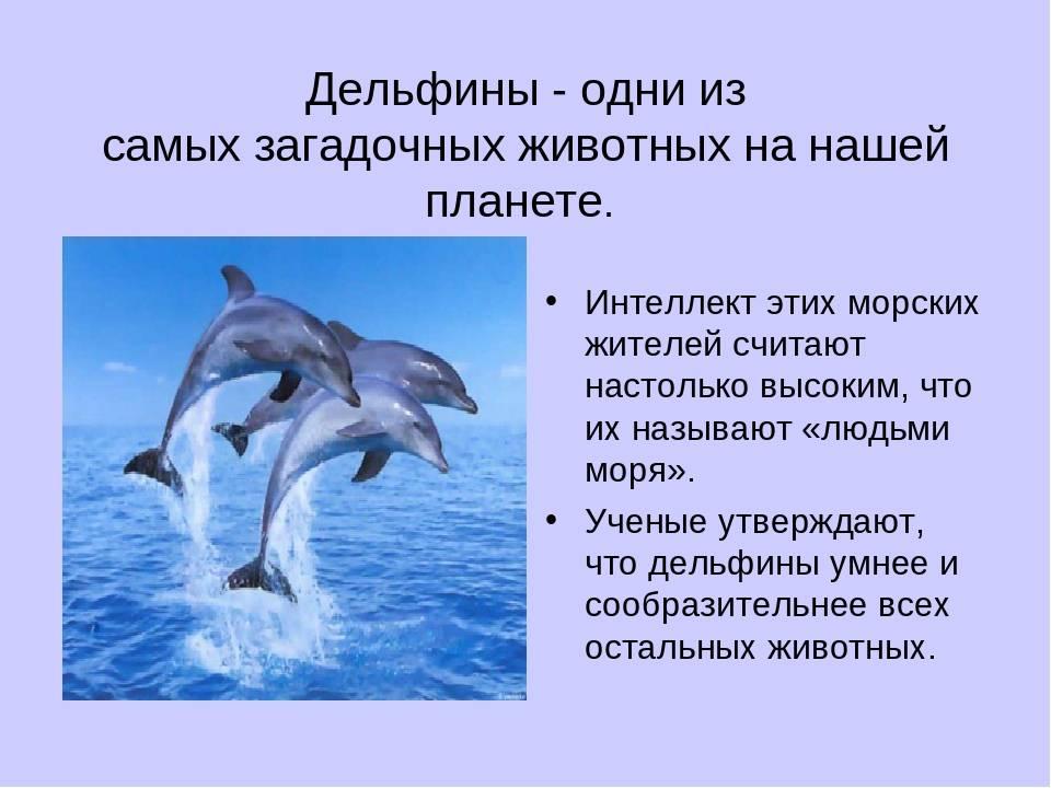 Как ученые пытаются расшифровывать язык разумных дельфинов