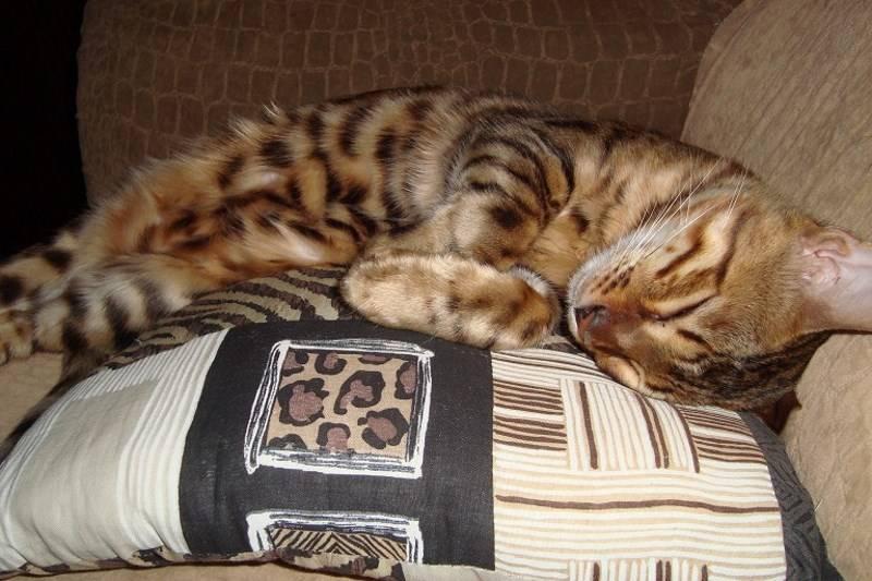Отучение котенка писать на кровать