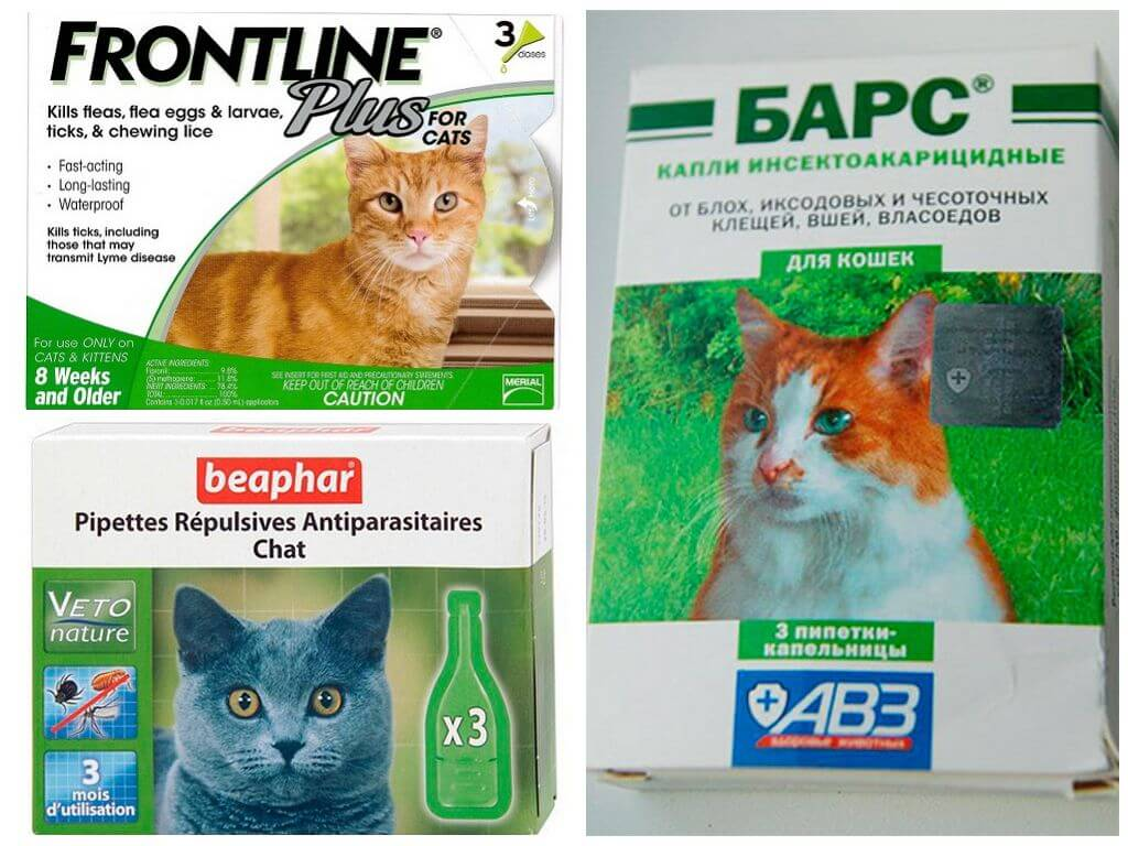 Таблетки от блох для кошек: особенности использования, обзор препаратов и отзывы