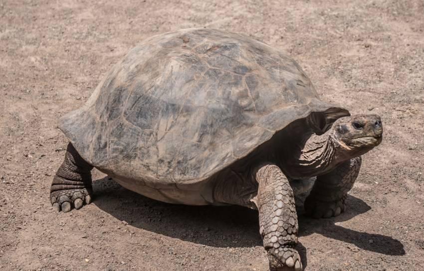 Сколько обычно живут красноухие черепахи в хороших домашних условиях. как продлить жизнь питомцу?