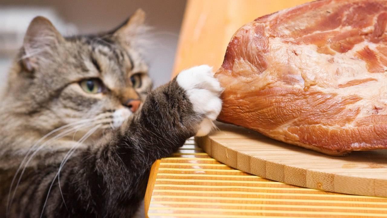 Своё не пахнет: как избавиться от кошачьего запаха? — 4 лапки
