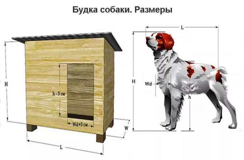 Вольер для собаки своими руками: размеры, материалы, устройство