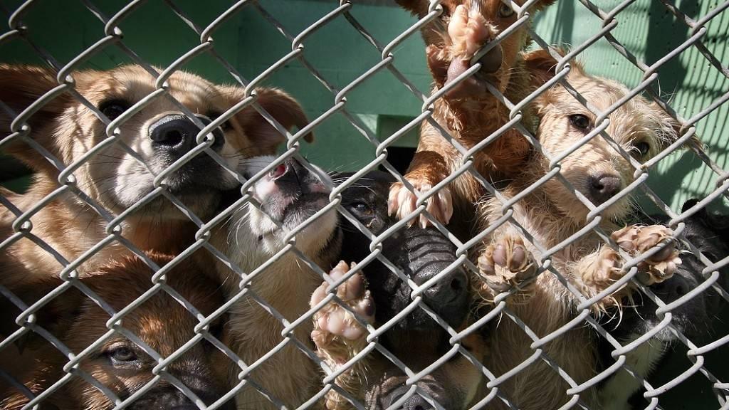 Собачий бизнес: за шесть лет на отлов бродячих животных в улан-удэ ушло 80 миллионов рублей - новости бурятии и улан-удэ