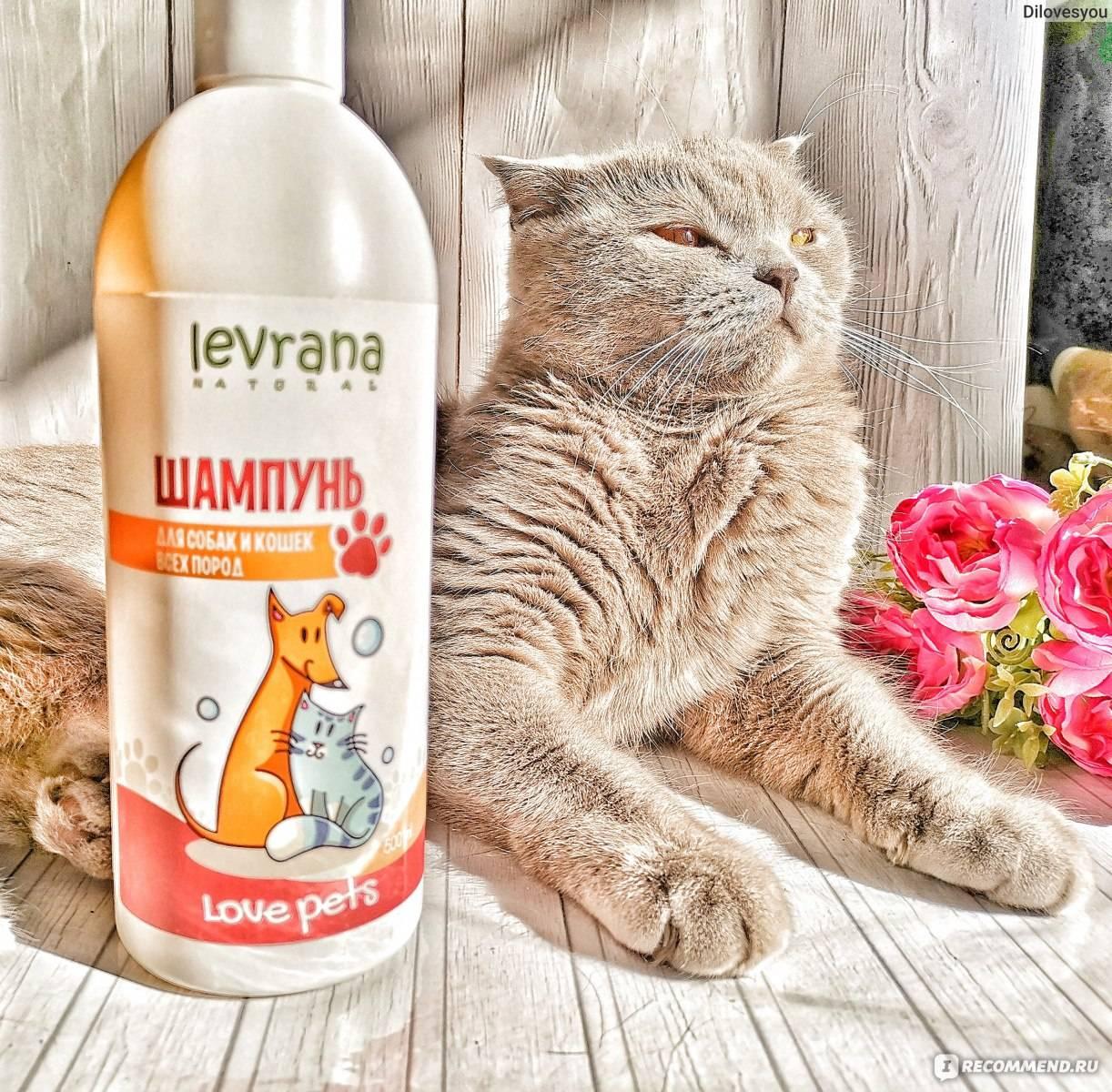 Сухой шампунь для кошки: особенности выбора и применения, популярные производители косметического продукта и отзывы владельцев животных