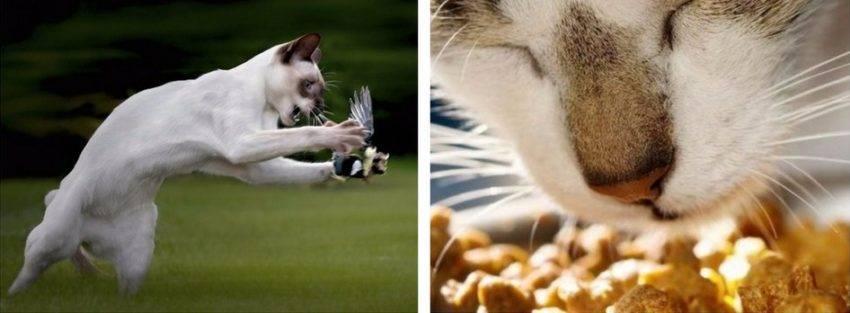 Что будет если кошке обрезать усы - последствия, интересные факты | beauty-line14a.ru