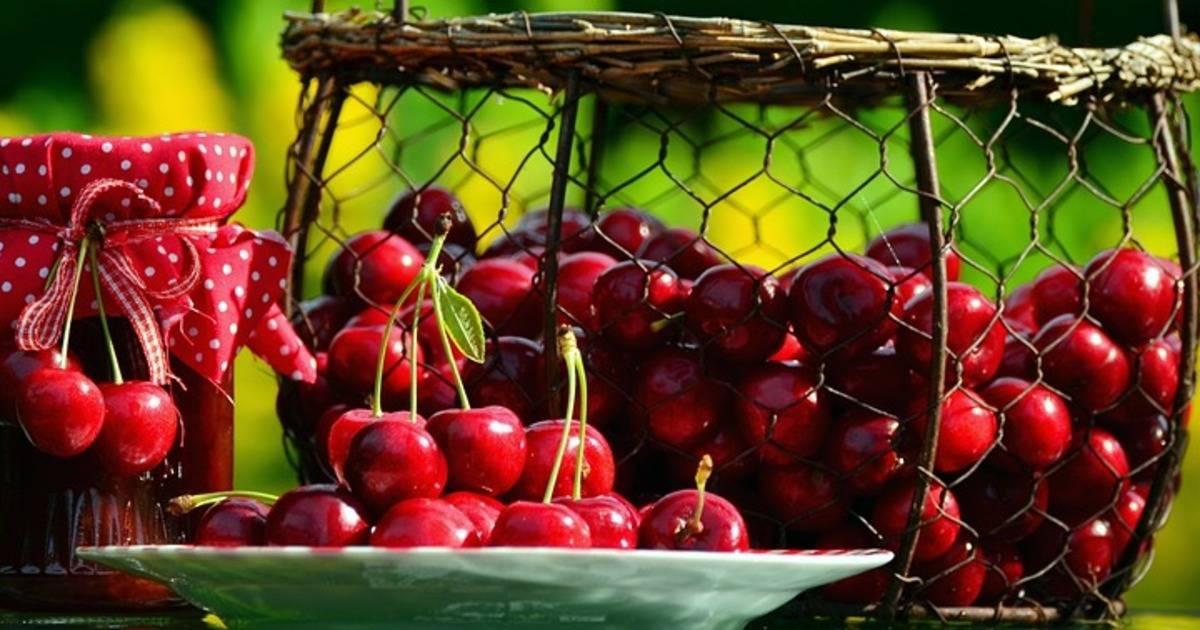 Прошу совета (саженцы черешни и абрикоса): группа плодовые деревья и кустарники