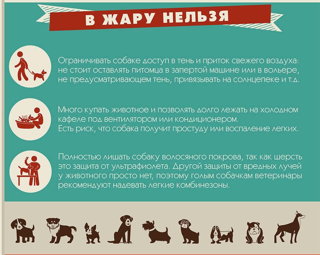 Как помочь домашним животным в жару