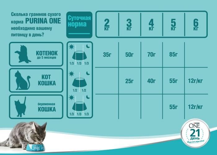 Кошки, лечебный корм для кошек, особенности и применение