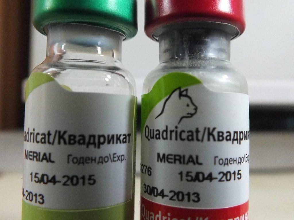 Квадрикет для кошек: инструкция по применению, состав, дозировка и цена | kotodom.ru