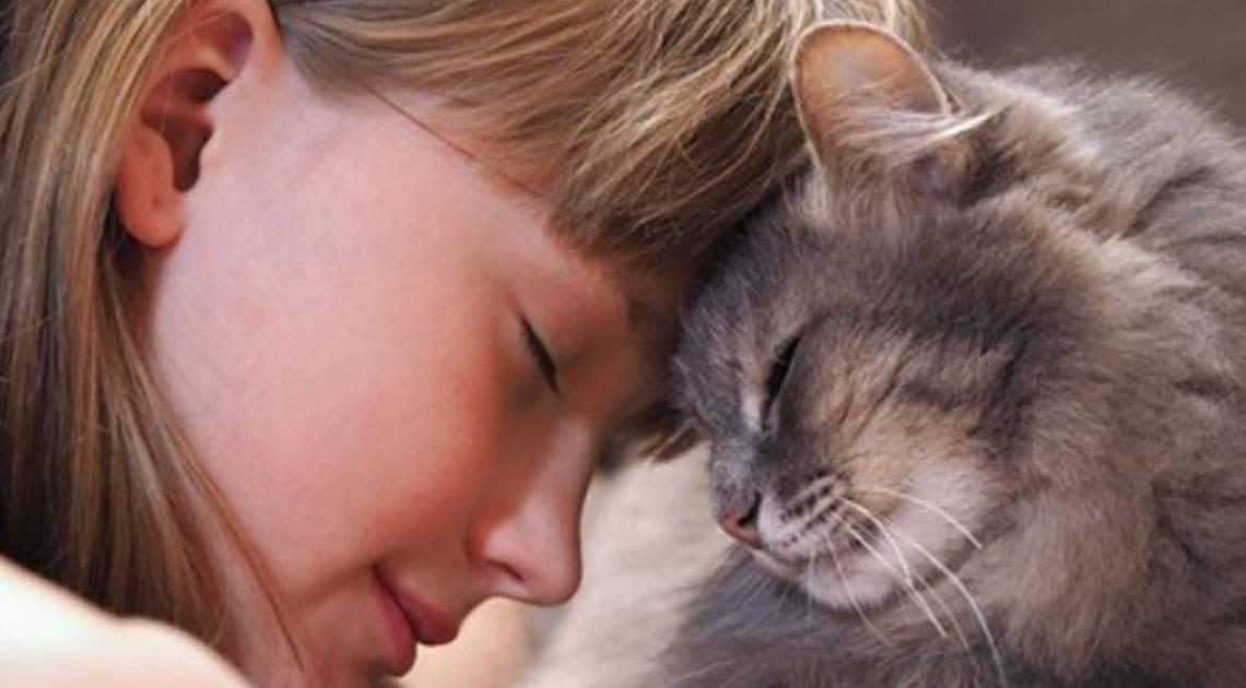 Почему некоторые кошки «разговорчивы» с хозяевами, а некоторые молчаливы | gafki.ru | яндекс дзен