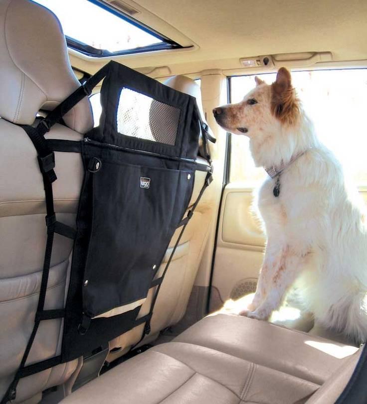 Перевозка собак в машине: общие правила, адаптация, устройства перевозка собак в машине: общие правила, адаптация, устройства