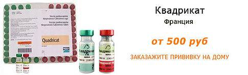Квадрикат - вакцина для кошек: обзор, цена, отзывы