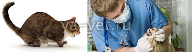 Почему кошка кашляет и хрипит