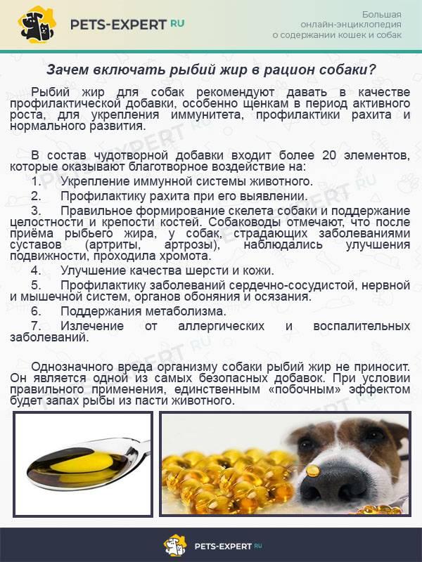 Как и чем кормить той-терьера в домашних условиях: общие рекомендации по здоровому питанию и отзывы владельцев