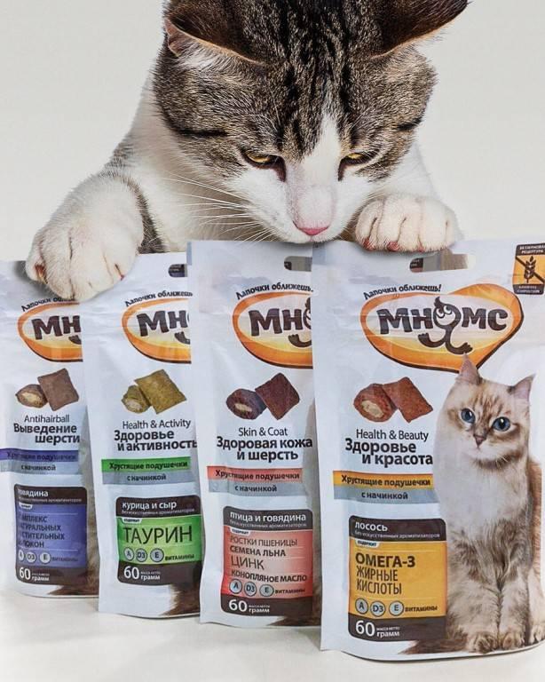 Чем вывести шерсть из желудка кошки в домашних условиях. как вывести шерсть из желудка кошки.