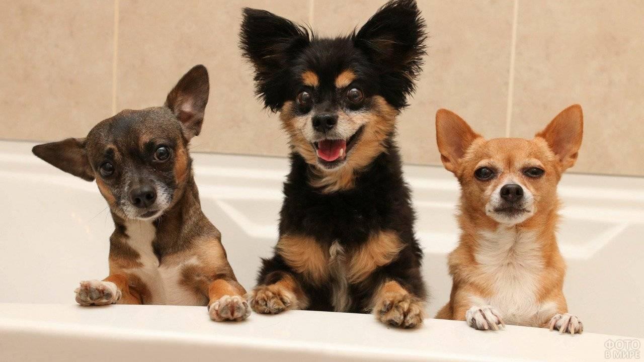 Породы собак маленьких размеров: названия и фотографии