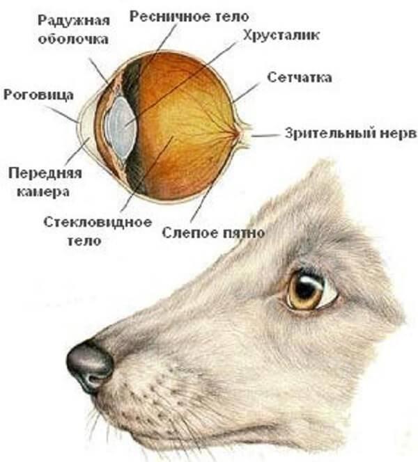 Как собаки видят наш мир?
