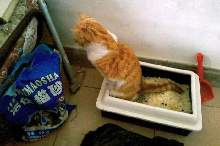 Кот какает кровью: причины и лечение