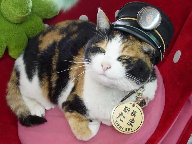 Жители мелитополя пожаловались на спасателей в «операции» по спасению кошки (фото) - ria-m.tv