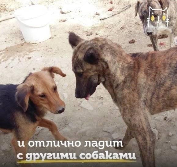 Лайфхаки, как подружить собак между собой: новости, собака, дрессировка, щенок, животные, лайфхаки, советы, эксперты, домашние животные