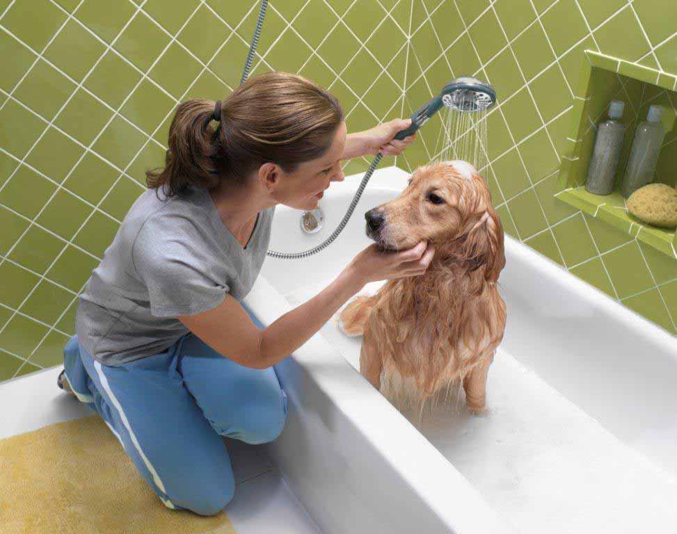 Как часто мыть собаку, можно ли мыть собаку мылом, шампунем