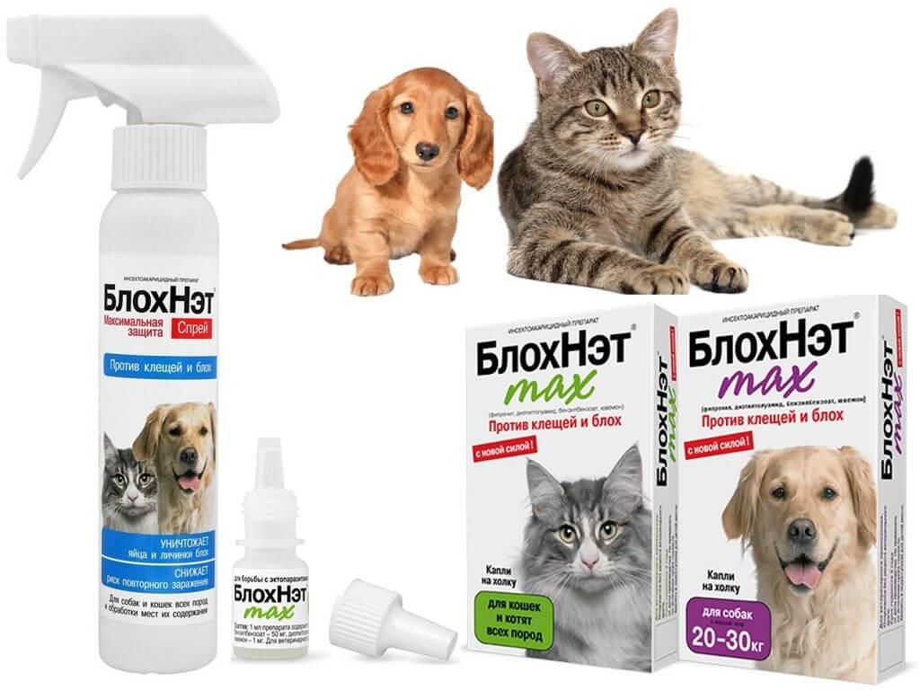 Натуральные средства защиты от блох и клещей для собак и кошек