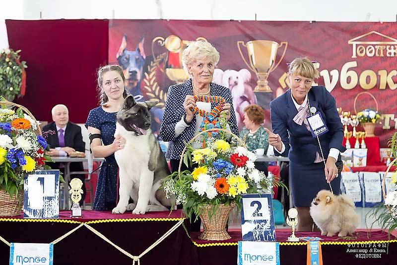 Выставка крафт 2020: история и ставки букмекеров на собак