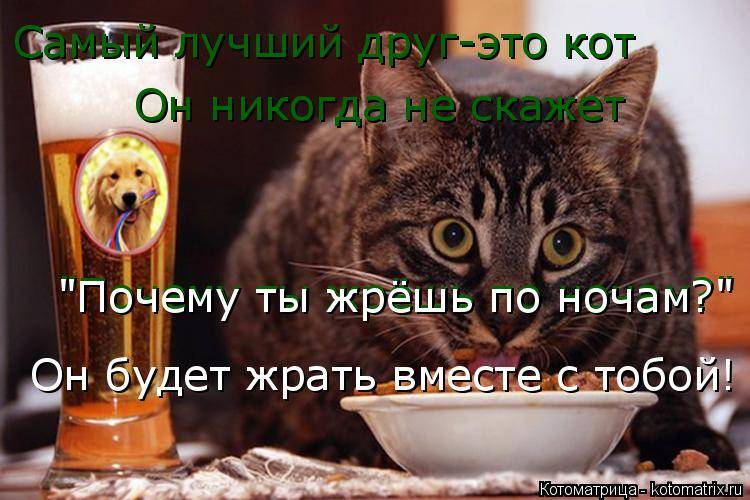 Почему кошка много ест и не наедается