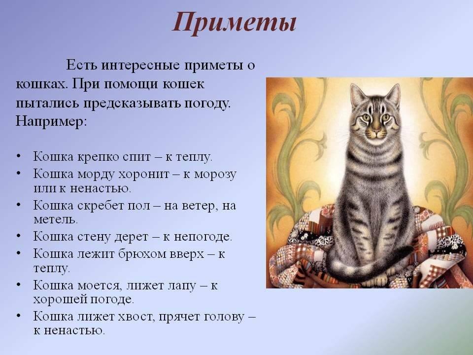 Кот или кошка шипит на хозяина — что делать? | zdavnews.ru