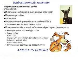 Аденовирусные инфекции - аденовирус | университетская клиника
