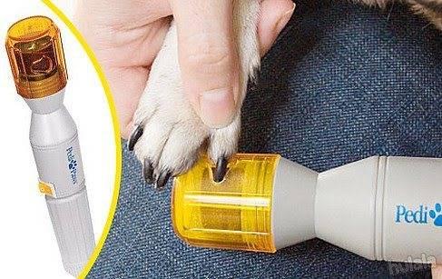 Почему собаки и кошки линяют и что c этим делать - сибирский медицинский портал