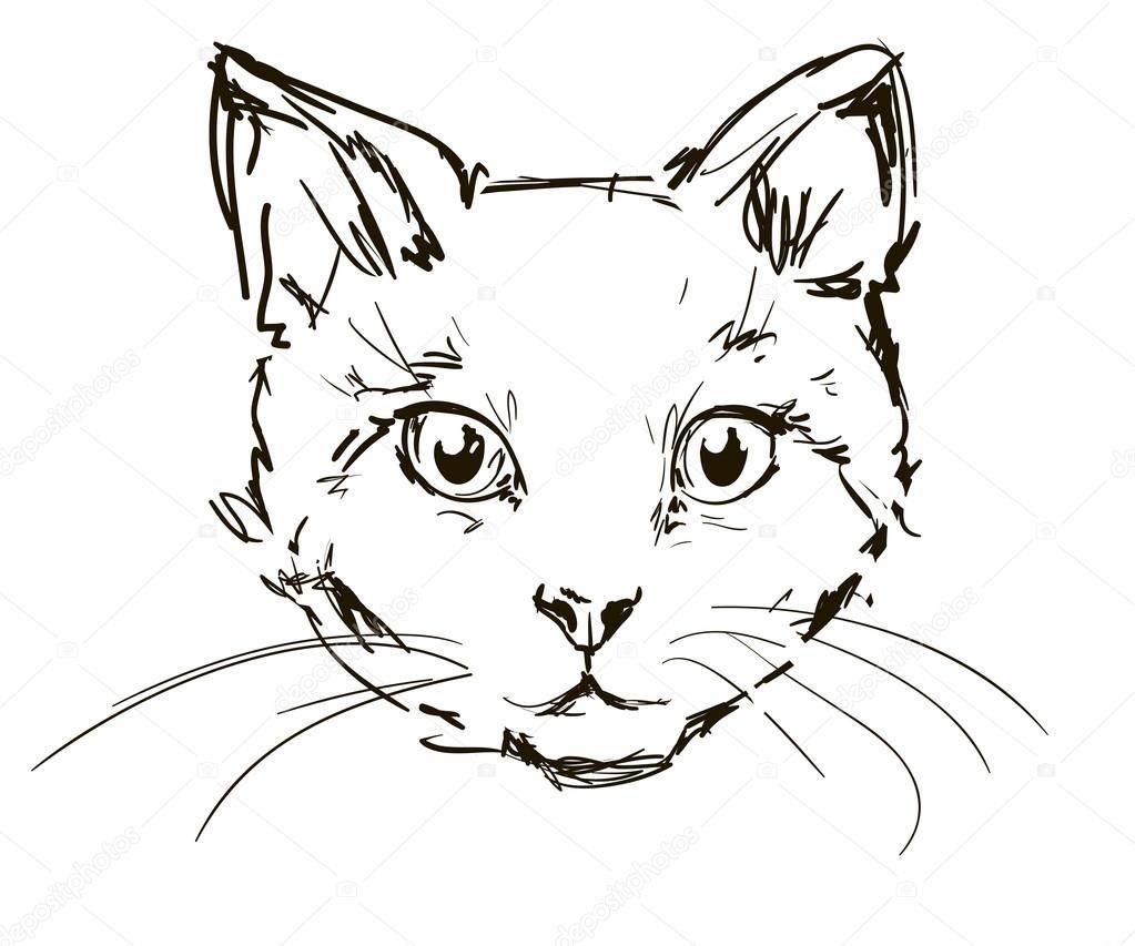 Как нарисовать кошку поэтапно карандашом и не только: инструкции для детей с фото, как изобразить мордочку и глаза, аниме и др + схемы и видео