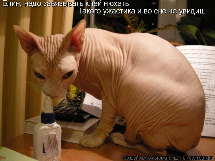 Почему коты и кошки любят валерьянку: как она действует на организм животного, что будет, если дать препарат, в чем польза и вред, отзывы