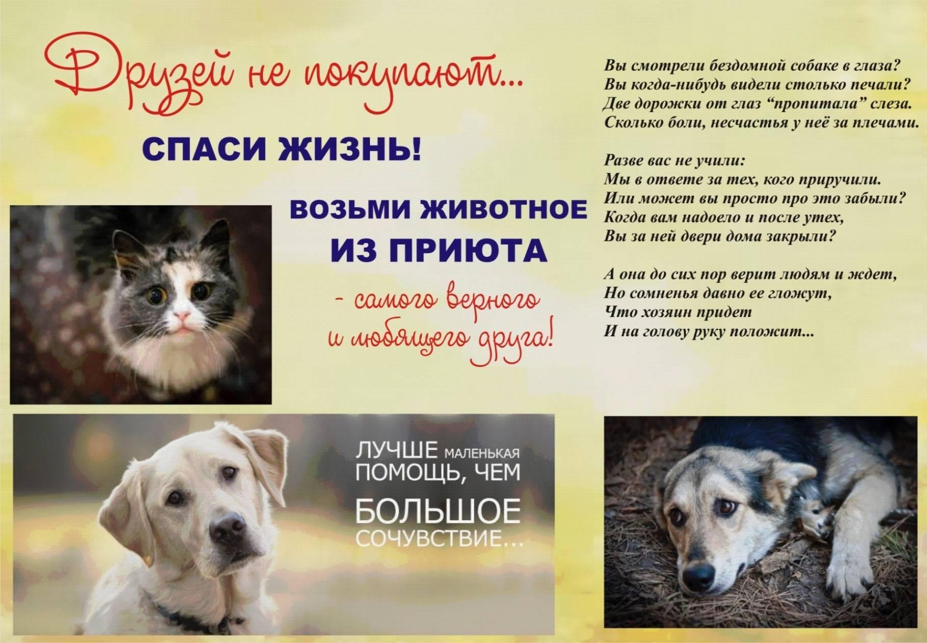 Как отдать в приют собаку в москве и московской области: обзор приютов, описание и отзывы