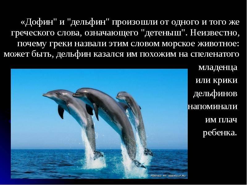 Как ученые пытаются расшифровывать язык разумных дельфинов (видео) – новости руан