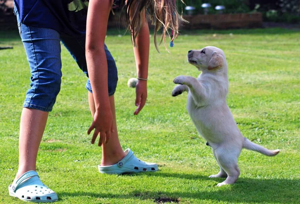 Собака бросается на людей на улице?кто виноват?что делать? (wolcha.ru)