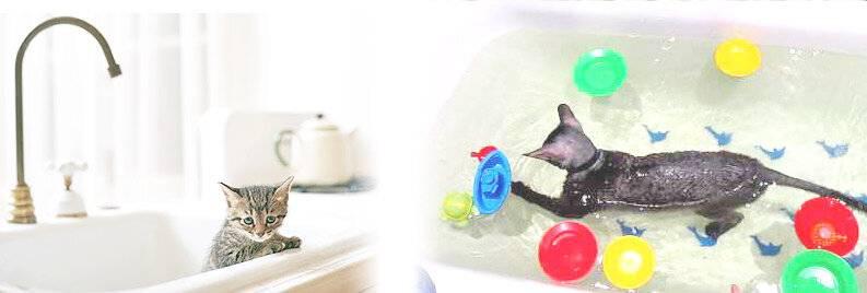 Почему все кошки и коты очень боятся воды и не любят мыться и купаться?