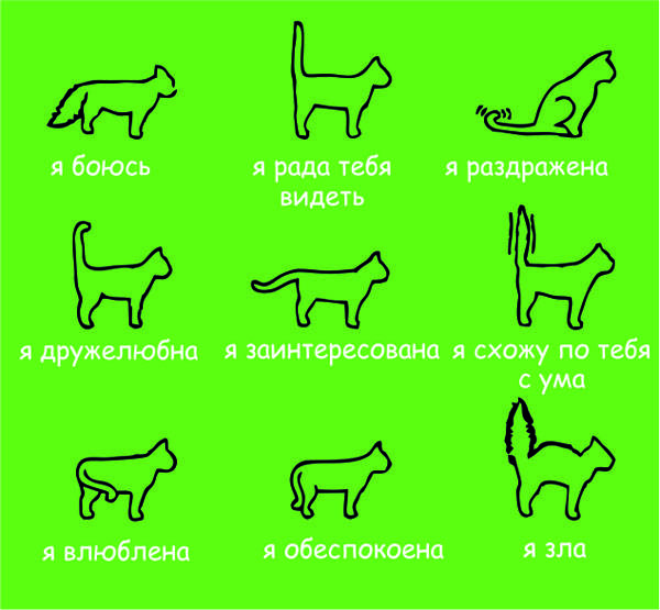 Зачем кошке хвост – для чего нужен и строение