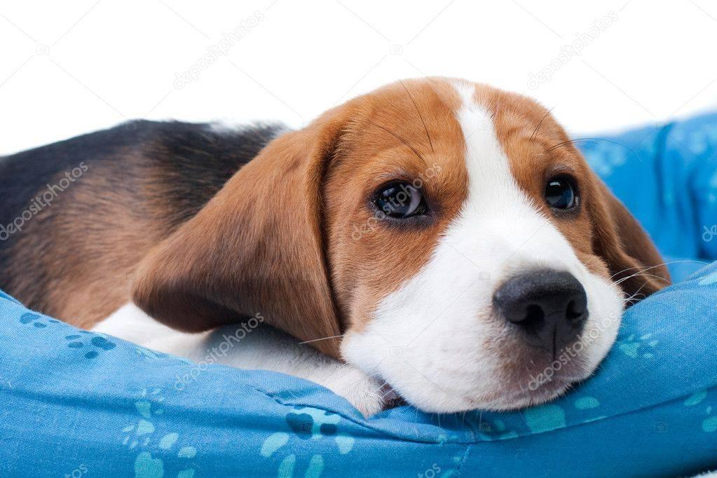 Почему щенок часто икает: причины и способы решения проблемы