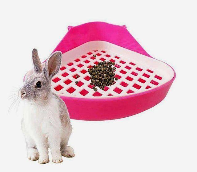 Понос у кролика: причины и лечение, что делать и чем лечить в домашних условиях