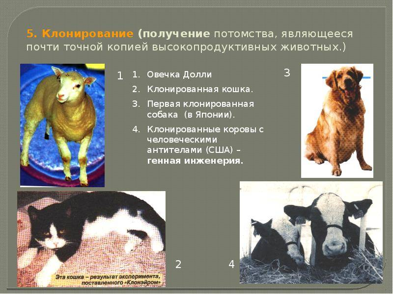 Клонирование животных и растений — википедия. что такое клонирование животных и растений
