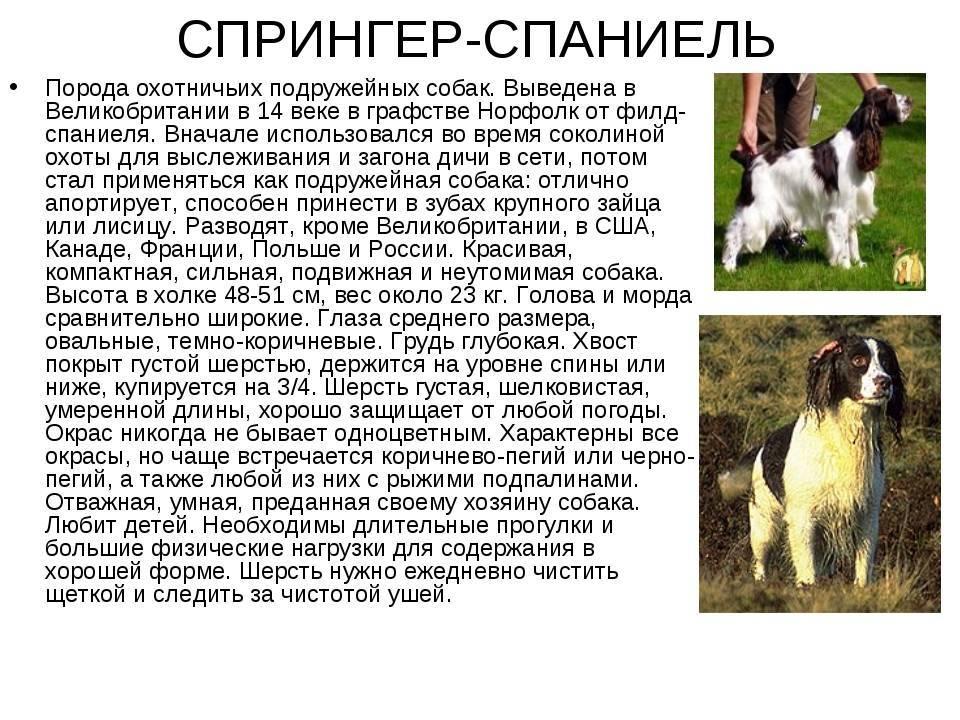 Одни из самых популярных собак – шнауцеры: все разновидности породы с фото
