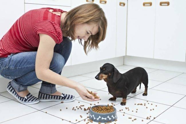 Как ухаживать за собакой в домашних условиях?